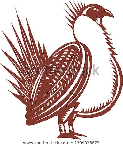 Sage Grouse Bird Woodcut Stock photo © patrimonio