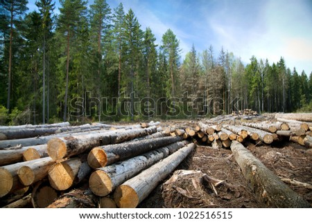 Logs lying on a green grass in a park Stock photo © Nejron