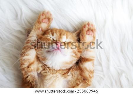 寝 · 猫 · 肖像 · フルフレーム · ノルウェーの · 森林 - ストックフォト © simply