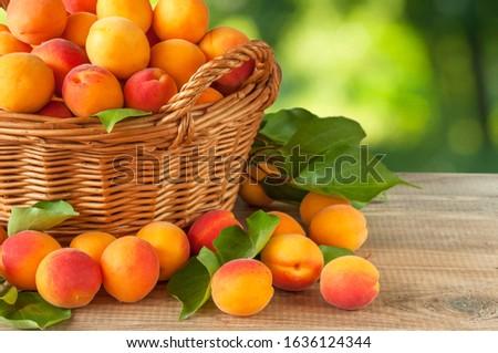 Fresh ripe apricots in basket Stock photo © furmanphoto