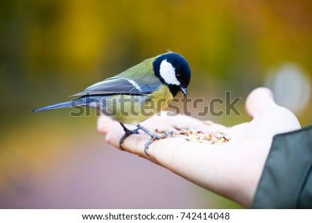 Feeding the birds in park, seed in hand Stock photo © zurijeta