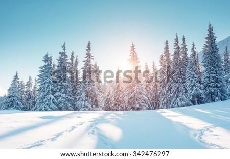 Majestueux hiver paysage lumière du soleil matin Photo stock © Leonidtit