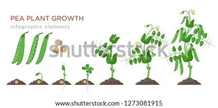 Plant klein natuur blad groene leven Stockfoto © vtorous