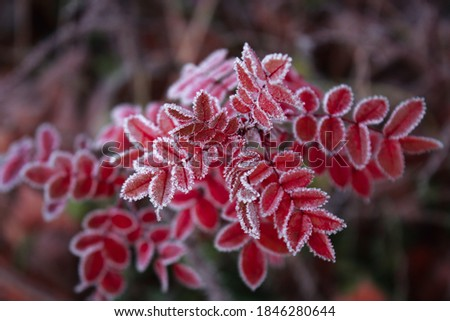 Dry frozen plant Stock photo © simply