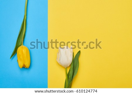 Close Up Of Tulip Petal Isolated With Copy Space Stock photo © Nelosa