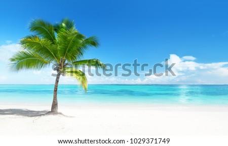 palmera · tropicales · verde · cielo · azul · cielo - foto stock © Wetzkaz