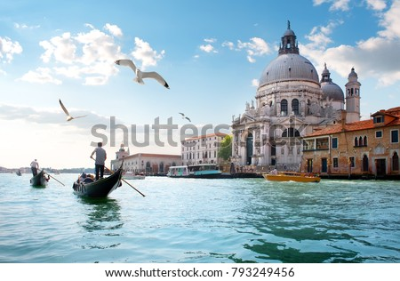 Gull In Venice Stock fotó © givaga