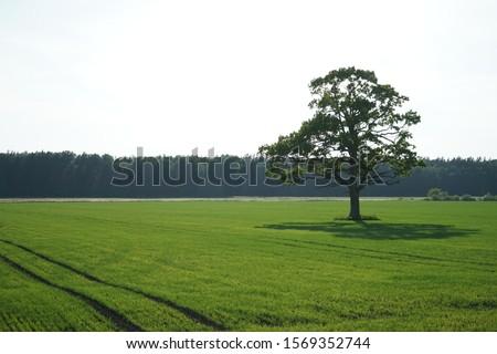 Green field and blue sky Stock photo © cherezoff