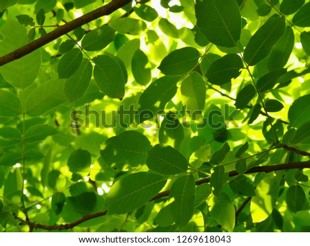Backlit Green Leaves Stock photo © fouroaks