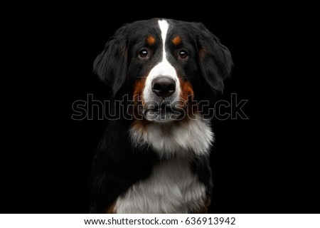 black dog portrait in the white studio stock photo © vauvau