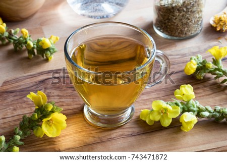 A cup of mullein (verbascum) tea with fresh mullein flowers Stock photo © madeleine_steinbach