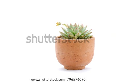 Belo flor argila pote branco ilustração Foto stock © bluering