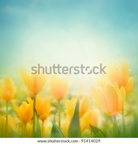 Field Of Tulip Flowers With Defocused Background Photo stock © mythja