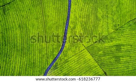 kavicsút · búzamező · Németország · fű · nap · természet - stock fotó © meinzahn