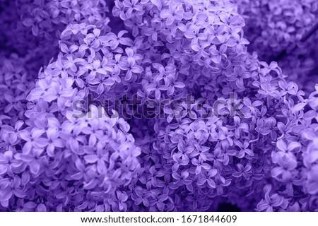 Orgona ág fehér virágok virág absztrakt Stock fotó © vrvalerian