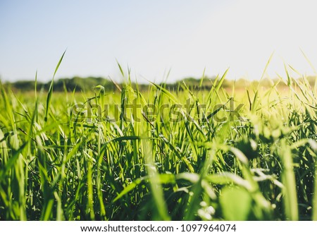 green grass with blue sky and water Stock photo © compuinfoto
