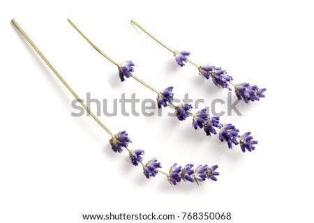 Séché lavande fleurs bois peu profond Photo stock © AGfoto