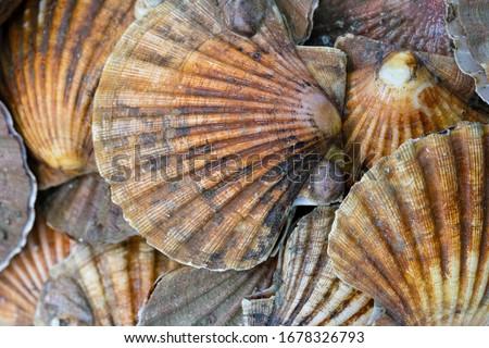 Market stall selling fresh scallops Stock photo © Hofmeester