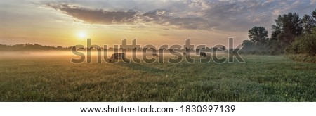 Vacas prado verde fresco manhã luz Foto stock © meinzahn