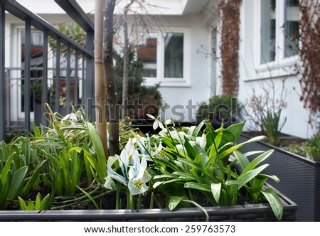 Beautiful modern terrace with snowdrops Stock photo © tannjuska