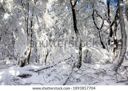 snow covered mountains at the Altkoenig mountain in Hesse Stock photo © meinzahn