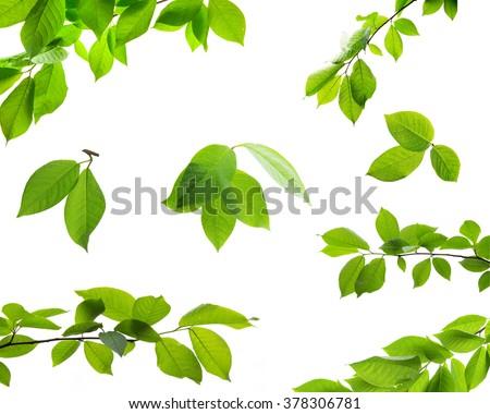 Foto stock: Folhas · verdes · isolado · branco · negócio · primavera · natureza