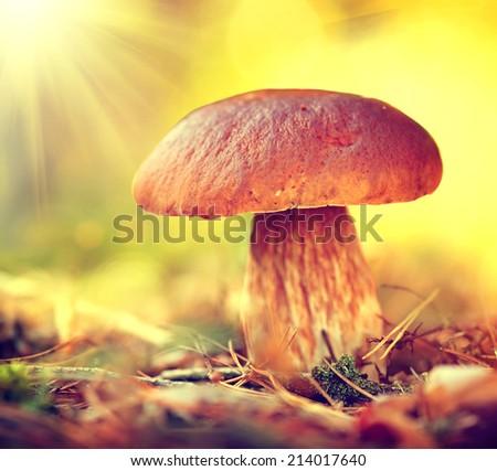 Grande funghi naturale impianti crescita Foto d'archivio © romvo
