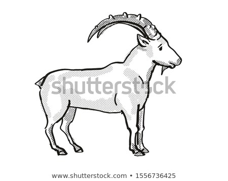 Nubian Ibex Endangered Wildlife Cartoon Drawing Stock photo © patrimonio
