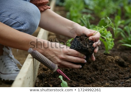 Small leaves of green seedlings of garden vegetables growing in greenhouse Stock photo © pressmaster