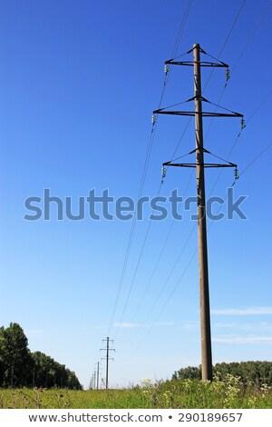 Drewna stali moc wygaśnięcia kraju drzewo Zdjęcia stock © Frankljr