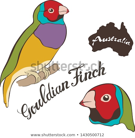 Australian finch Gouldian red headed male bird isolated stock photo © sherjaca