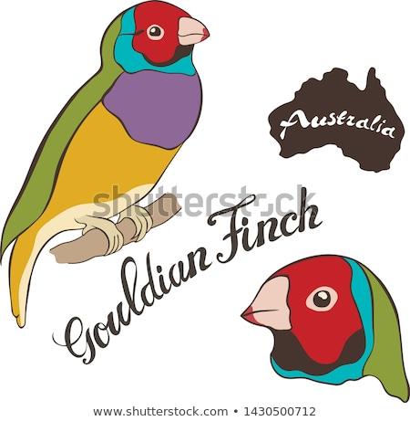 オーストラリア人 赤 男性 鳥 孤立した 支店 ストックフォト © sherjaca