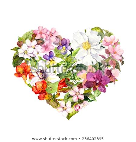 spring floral heart stock photo © orson