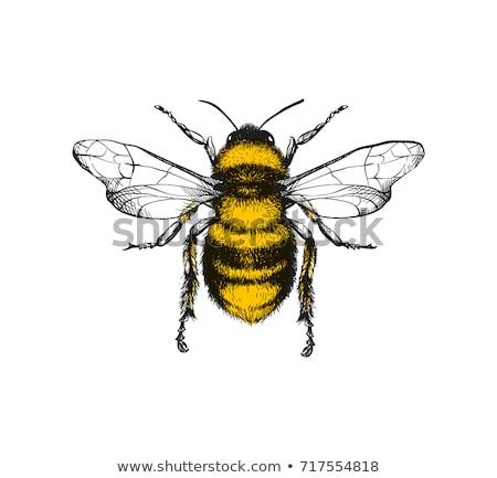 Mel de abelha flor-de-rosa jardim luz do sol animais selvagens Foto stock © suerob