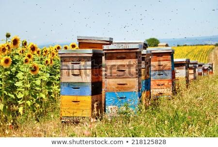 bee hive and sunflowers field stock photo © goce