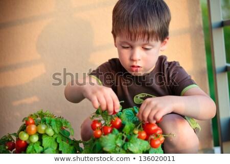 Kicsi fiú gyűlés friss zöldségek kert étel Stock fotó © photography33
