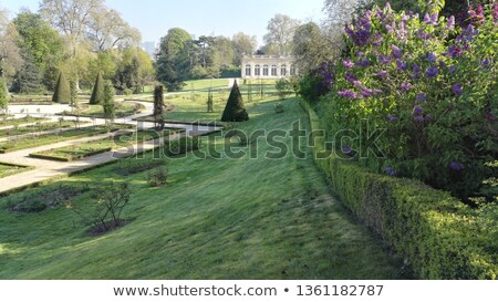 Foto stock: Boxwood In A Park In Paris France