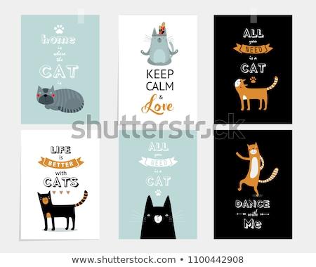 üdvözlőlap macska születésnap háttér jókedv játék Stock fotó © balasoiu