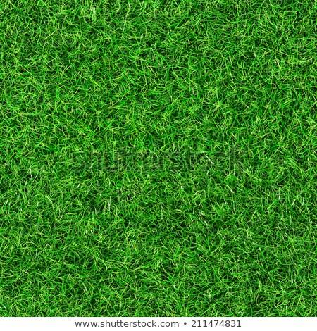 緑の草 テクスチャ パターン 参照してください もっと ストックフォト © Leonardi