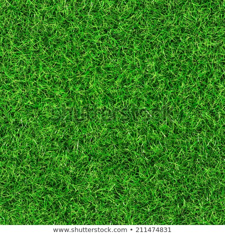 Grünen Gras Textur Muster sehen mehr Stock foto © Leonardi