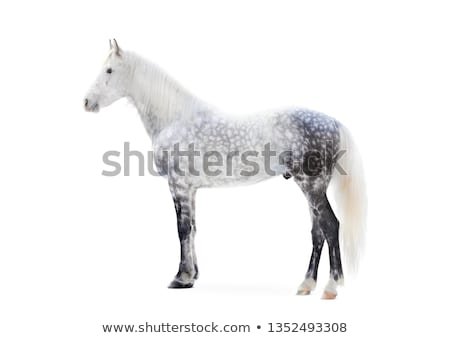 Russian trotter - an exterior stock photo © SKVORTSOVA