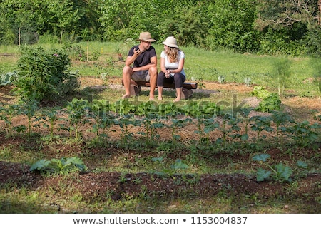 Couple picking produce in a vegetable garden Stock photo © photography33