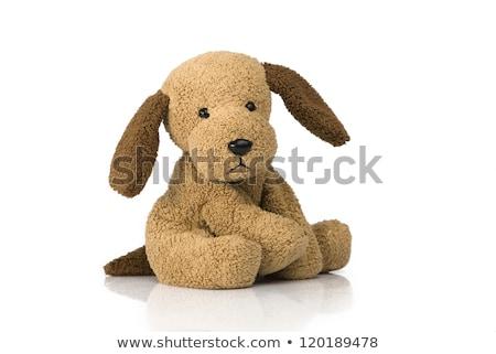 Felpa perro de juguete aislado destino tarjeta juguete Foto stock © Masha