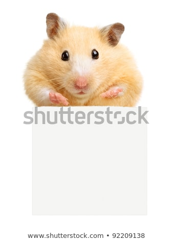 Hamster Holding A Blank Card Stock photo © Lightsource