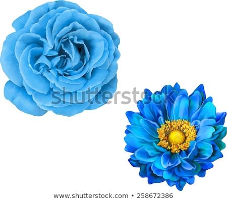 vektor · krizantém · kék · virág · kártya · kör · absztrakt - stock fotó © ikatod