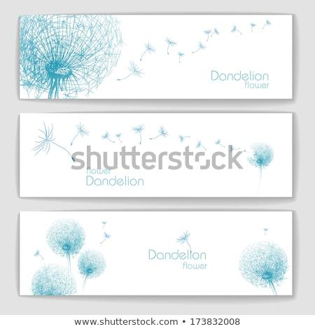 Сток-фото: одуванчик · баннер · набор · Баннеры · небе · цветы