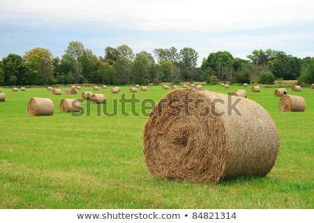 Circular hay bale in a field Stock photo © jrstock