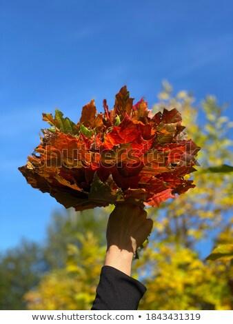 Stok fotoğraf: Akçaağaç · buket · gökyüzü · sonbahar · eps · vektör