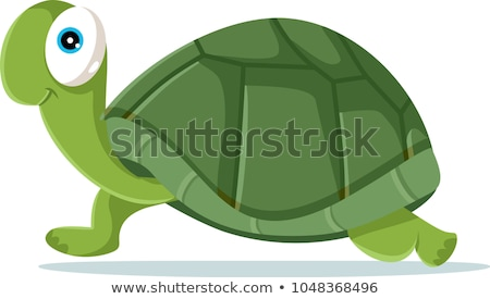 green turtle cartoon stock photo © aminmario11