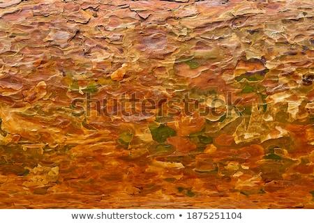 вечнозеленый · кустарник · бесшовный · текстуры · лист - Сток-фото © tashatuvango